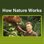 Free BBC1 'How Nature Works' Booklet
