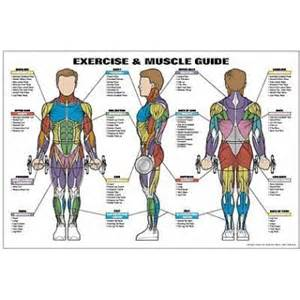 Free LA Muscle Fitness Guide (Worth